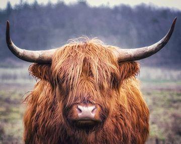 Porträt eines schottischen Hochlandbewohners von Dennis Bresser