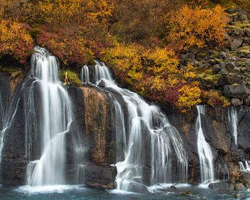 Der Herbst fällt von Gunther Cleemput