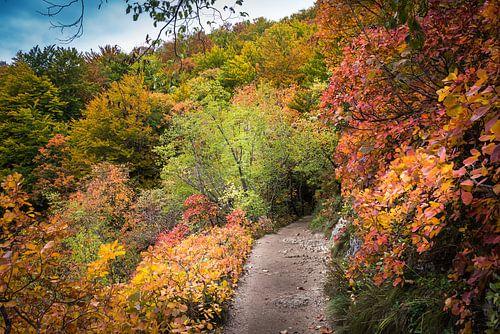 Wandelpad door het herfstbos, Kroatië