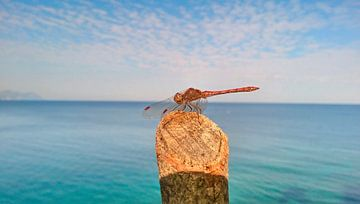 Oceaan Libelle van