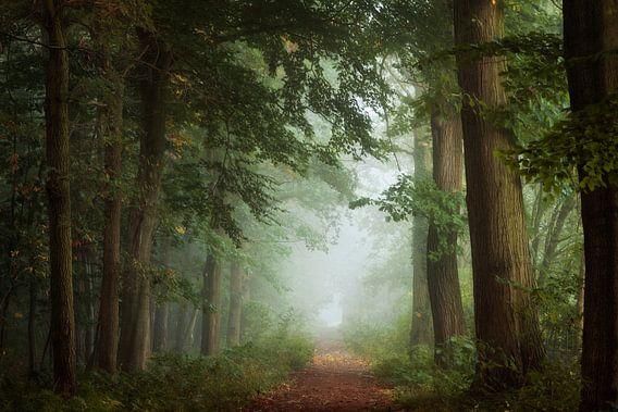 The Secret Path.