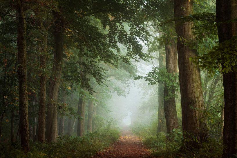 The Secret Path. van Inge Bovens