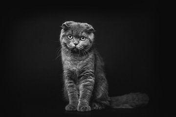 Porträt der dunklen Katze im Studio von Lotte van Alderen