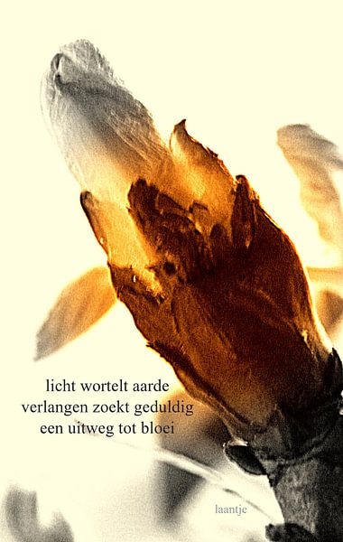 Openbreken van Piet Hardendood