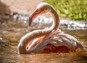 flamingo van Erika Gallegos