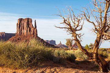 Frühling im Monument Valley von Peter Leenen