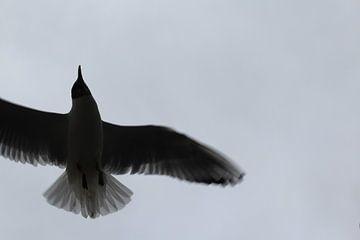 Flying dutch van Roxy Brauers