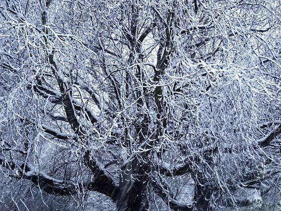 Tree Magic 176-A
