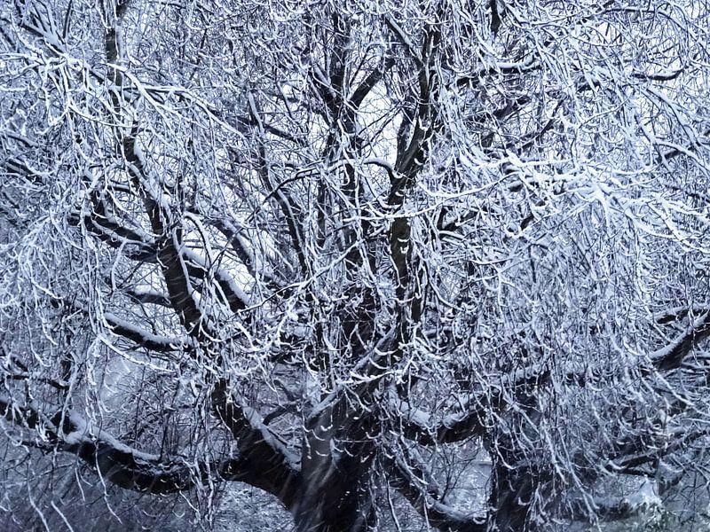 Tree Magic 176-A van MoArt (Maurice Heuts)