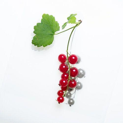 Botanica I Ribes van