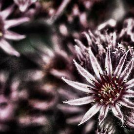 Bloemen in HDR van Isabel Alba Gonzalez