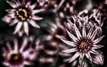 Bloemen in HDR von Isabel Alba Gonzalez