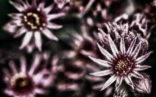 Bloemen in HDR van