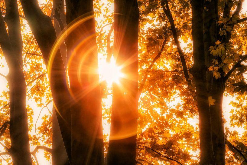 Stare into the Sun van Cho Tang