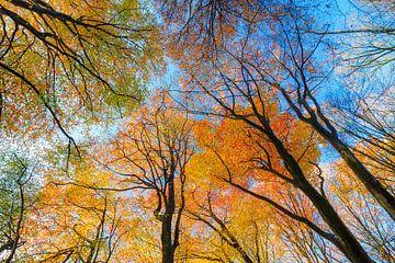 Boomtoppen in de herfst van Dennis van de Water