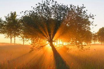 Sonnenaufgang am frühen Morgen während eines schönen Frühlingstages über dem Zwartendijk bei Kampen von Sjoerd van der Wal