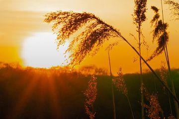 Träumen im Sonnenuntergang von Jorrit Eijgensteijn