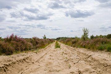 Purpurheide im Naturschutzgebiet in Oirschot von Angela Kiemeneij