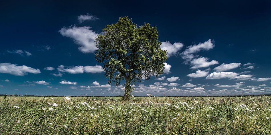 Boom en wolken in het Friese land nabij buurtschap Miedum in de gemeente  Leeuwarden van Harrie Muis