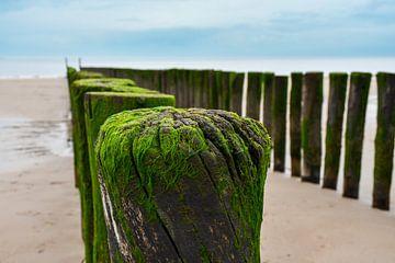 Oude palen op het strand van bart hartman