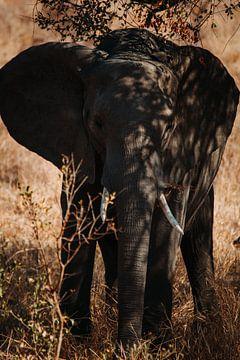Olifant opzoek naar wat schaduw van Pepijn van der Putten