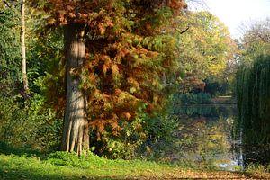 Julianapark in Utrecht in de herfst van In Utrecht
