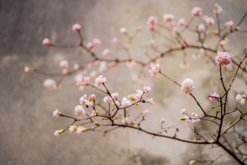Frühling von Myrthe Vlasveld