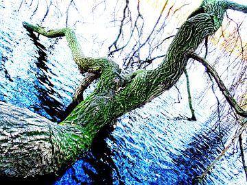 Tree Magic 146 van MoArt (Maurice Heuts)