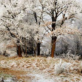 winter landschap van Petra Terpstra