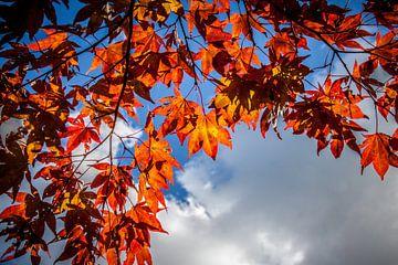 Herfstkleuren van Monique Hassink