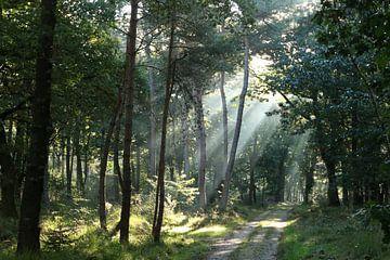 Licht in het bos von Jan Katsman
