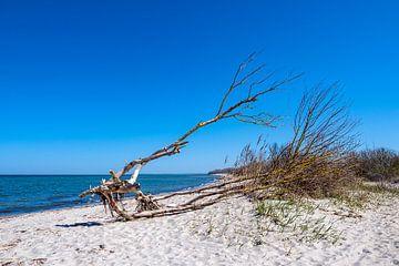 Baumstamm an der Küste der Ostsee auf der Insel Poel von Rico Ködder