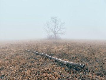 Mystieke januarimorgen op de Hornberg van Max Schiefele