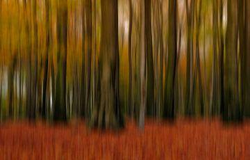 Boomstammen in het herfstbos van Ellen Driesse