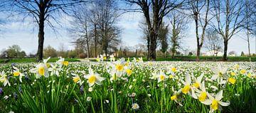 Frühlingslandschaft von Corinne Welp