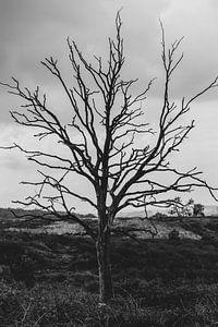 Lonely Tree van MDRN HOME