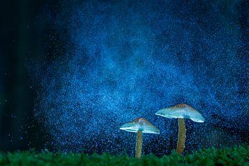 champignons sur la galaxie sur Berend-Jan Bel