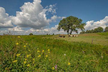 Hollandse koeien bij  (hooi) strowagen in de Betuwse polder van Moetwil en van Dijk - Fotografie