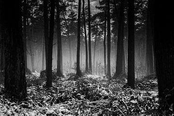 Reichswald im Winter von Eliberto