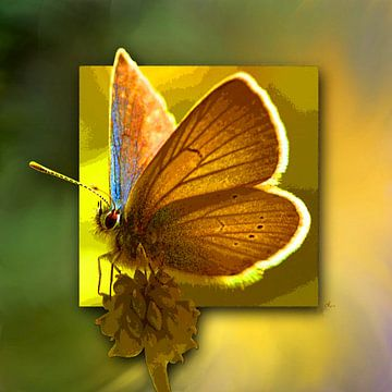 Butterfly | Red Clover-Blue van Dirk H. Wendt