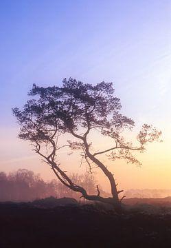Strabrechtse Heide 175 sur Desh amer
