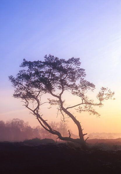 Strabrechtse Heide 175 van Deshamer