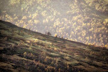 Krumme Berge von Marc Hollenberg