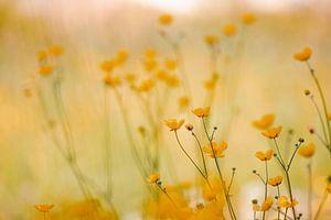 Happy Yellow van Hiske Boon