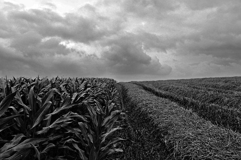 Corn, straw and clouds von Armand L'Ortije