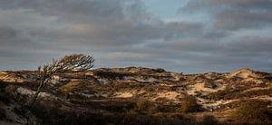 Herten in de duinen van Bo Scheeringa Photography
