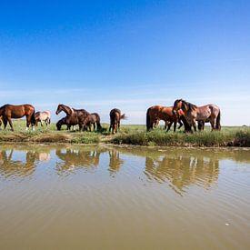 Paarden op de Boschplaat van Foto van Anno
