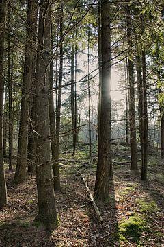 Zonlicht in het bos van Alex Hiemstra