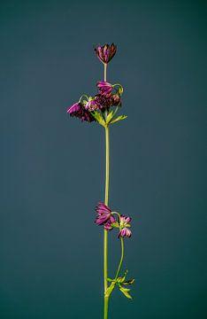 Lassen Sie Ihre Blumen nicht hängen (grün) von michel meppelink