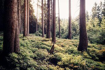 Idylle im Wald van